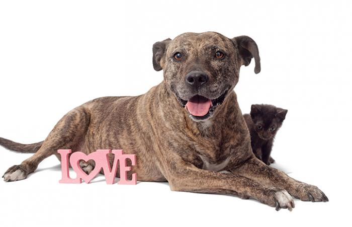 A brindle dog and kitten posting with a Love sign for Valentine's Day