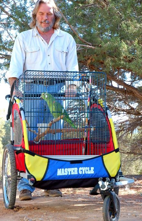 Parrot riding in a bird stroller