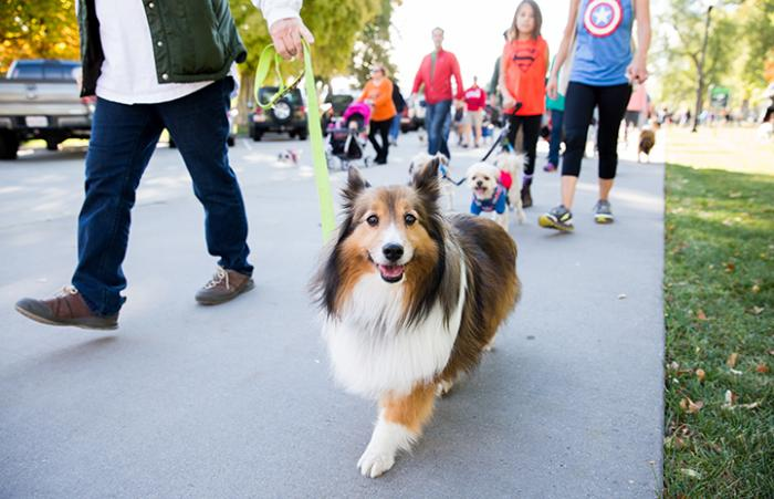 Grab your leash: 'Walking the Dog Day' is coming