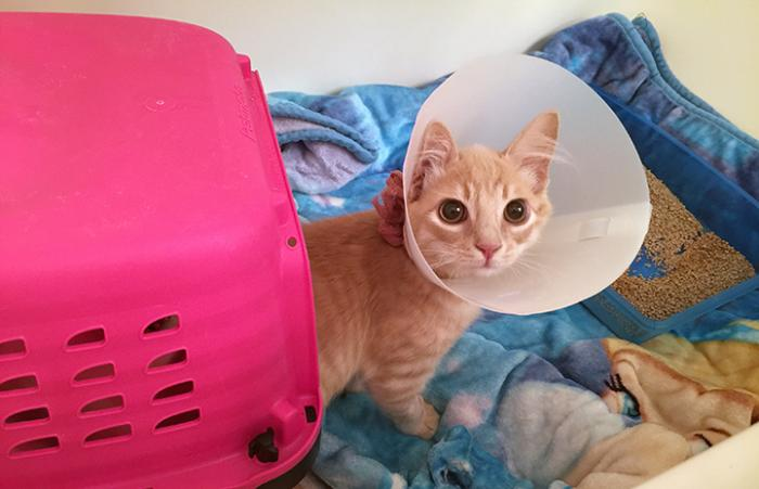 Quinton the kitten got the medical care he needed