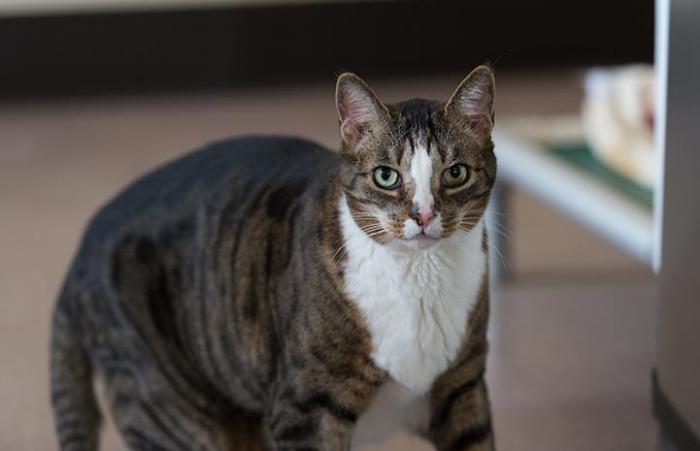 Clark, the elusive cat, has a change of heart