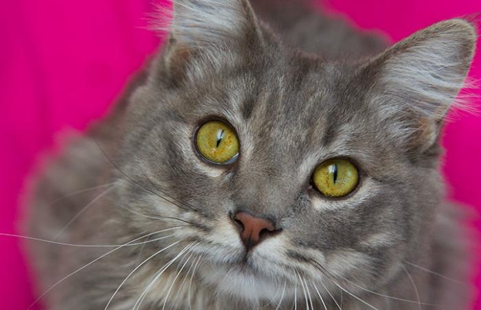 Tinker the cat from Salt Lake County Animal Services