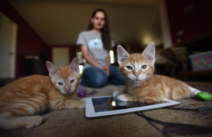 Popcorn and Cheddar, kittens with cerebellar hypoplasia, playing on an iPad
