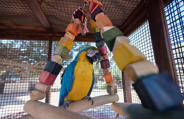 To help lose some weight, Savannah has lots of fun things to climb on, play with and explore