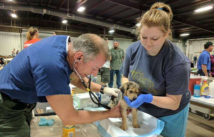 A puppy receiving veterinary care the the at the Rescue and Reunite Center after Hurricane Harvey