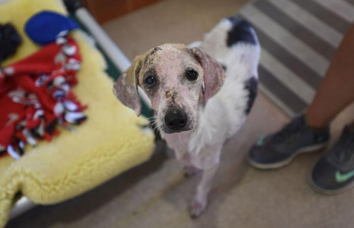 Kirby, a Hurricane Harvey survivor comes to the Sanctuary to recover