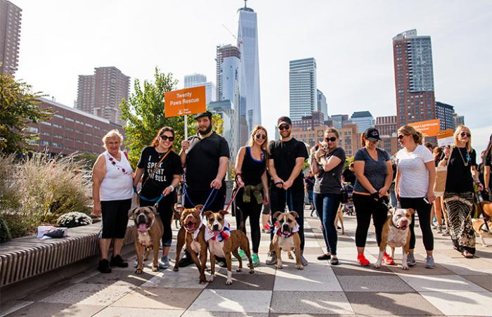 Twenty Paws Team and NY skyline