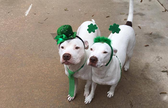 Princess and Nate celebrating St. Patrick's Day together