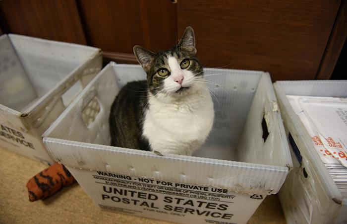 Abner the cat who loves being an 'only cat' is now boss of the mailroom