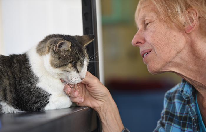Pete, an affectionate cat with one-eye and FIV is adopted from Best Friends