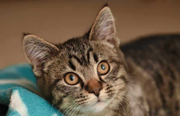 A kitten rescue saved Cedar, who had been hurt