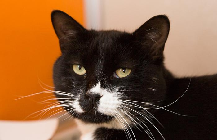Elvis the tuxedo cat was adopted from the Best Friends Pet Adoption Center in Salt Lake City just in time for the holidays