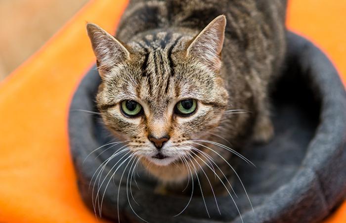 Peta, a cat with an attitude, is adopted by someone in New York who sees past her hissing and tough exterior