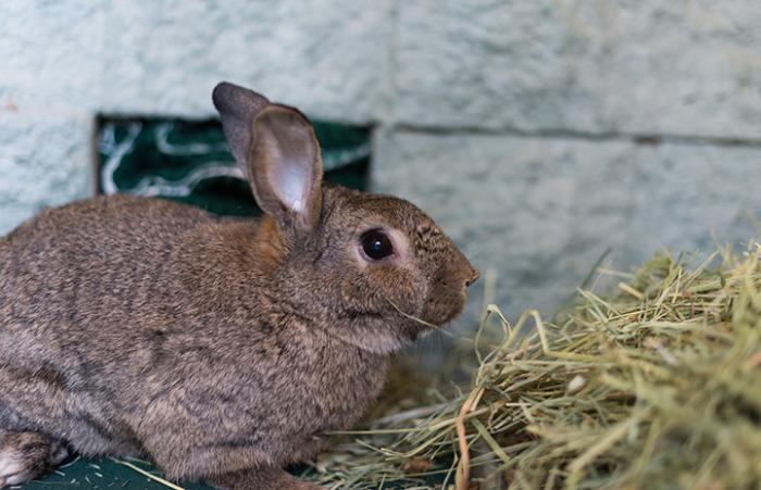 Rusty the rabbit gets expert care for his injured feet and finds new love at the Sanctuary
