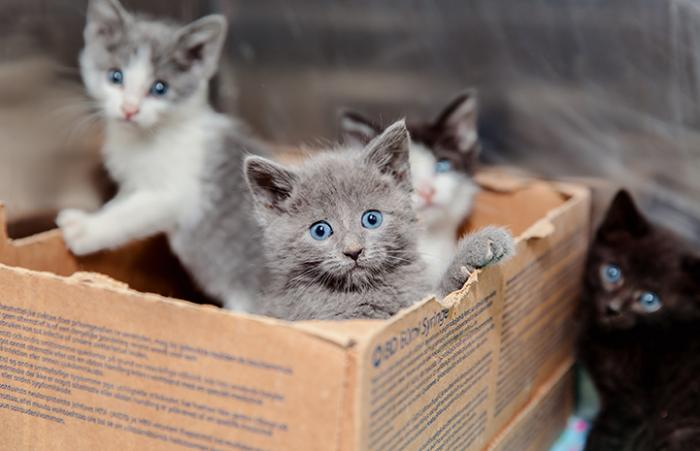 The A39 litter of kittens in a box