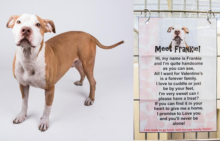 Frankie the dog with his love letter at LifeLine Animal Project