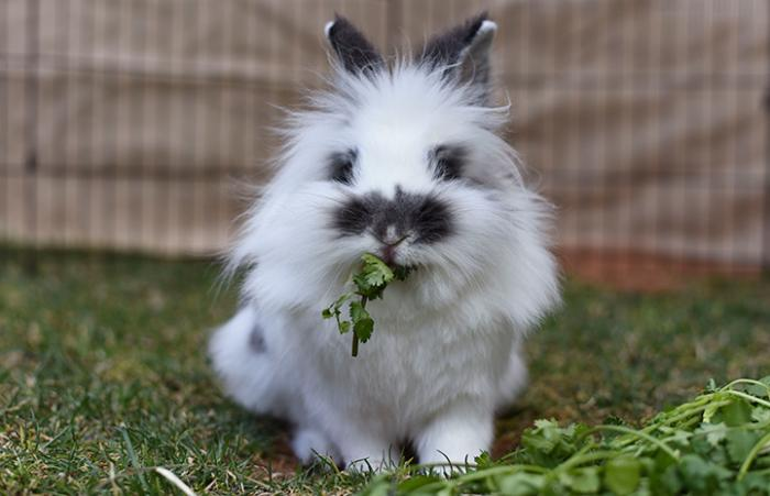 February is Adopt a Rescued Rabbit Month. Read 10 fun, interesting and insightful facts about bunnies.