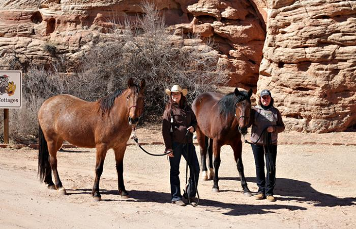 Wire and Scarlett the horses get adopted from Horse Haven