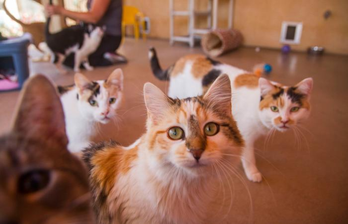 Group of multiple cats in the outside areas of one of the Cat World rooms