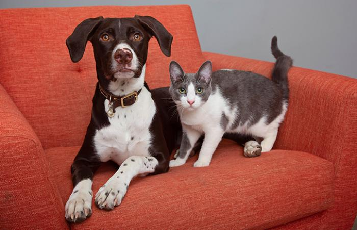 Tank the cat next to Gunner his canine buddy on an orange chair