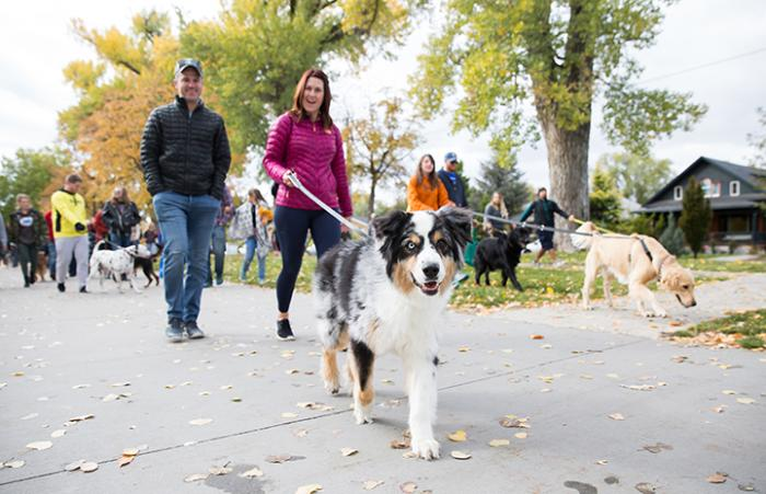 Odd-eyed border collie type dog being walked by a woman during Strut Your Mutt in Salt Lake City