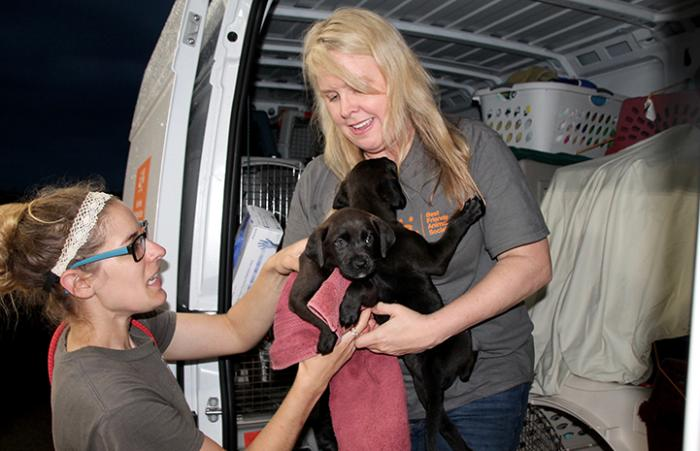 A woman in a van handing off two black Labrador puppies to another woman