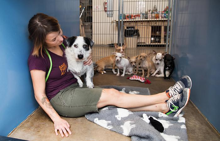 Woman sitting in a kennel with a dog on her lap and a group of shy Chihuahua mix dogs behind them