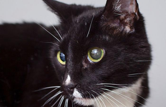 Nella the senior cat with kidney disease