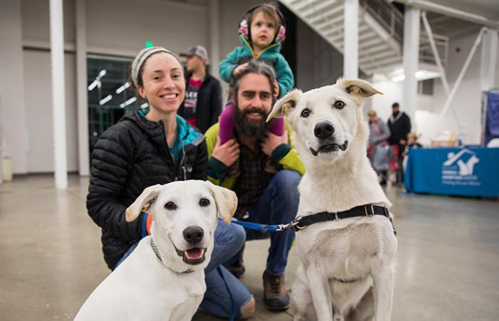 Two light colored Labrador mix doge with a young family where the child is sitting on the father's shoulders