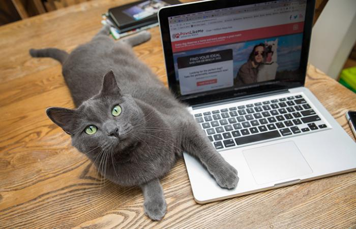 Gray cat lying next to a laptop computer with his paw over the keyboard