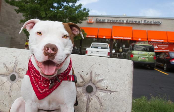 Captain Cowpants the dog in front of the Best Friends Lifesaving Center in Salt Lake City