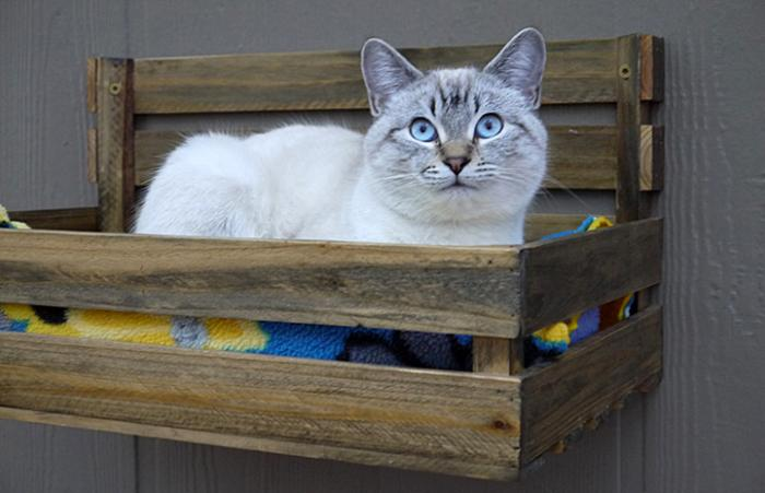 Xenia, the Siamese kitten in a wooden box bed