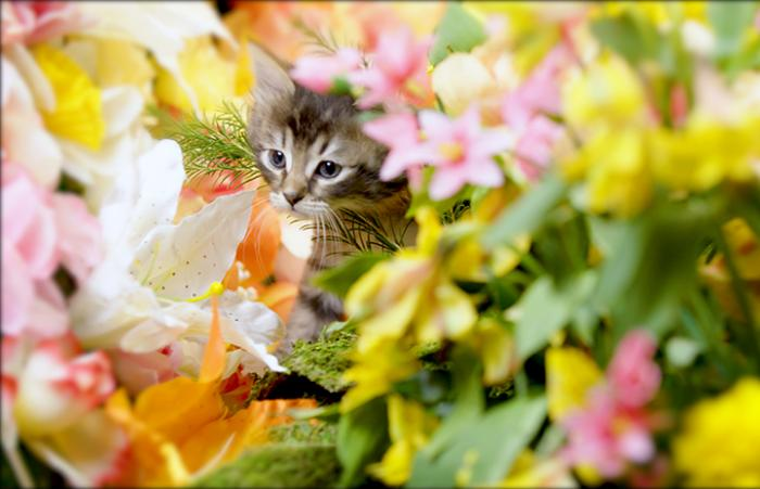 Brown tabby kitten surrounded by flowers