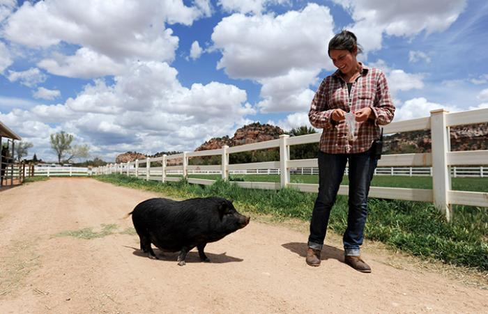 Rosalie taking Kit the potbellied pig for a walk