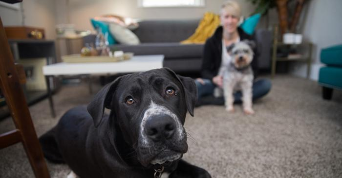 Black and white dog being fostered in a home with a woman and other dog behind him