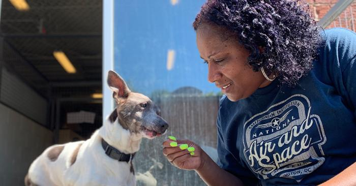 Faye Robinson reaching out to a senior terrier mix dog