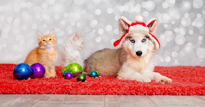 Orange tabby kitten and husky mix puppy wearing a hat lying on a red rug next to Christmas ornaments with sparkle background