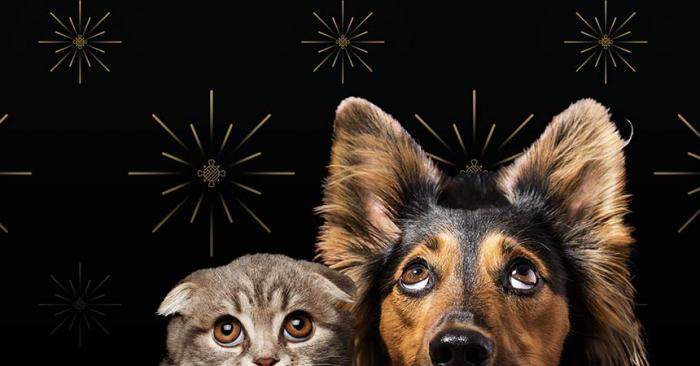 A cat and dog cowering from fireworks