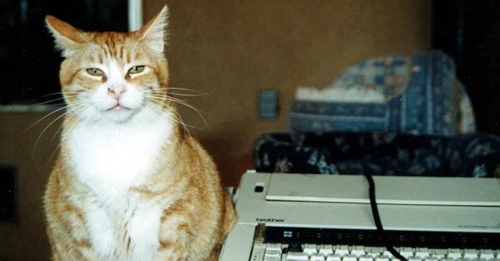 Tomato the cat next to an electric typewriter