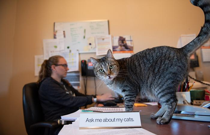 "Svetlana the brown tabby cat on Cat World manager Amy Kohlbecker's desk standing next to an ""Ask Me About My Cat"" sign"