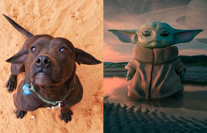 Josie the dog next to Baby Yoda at look-alikes