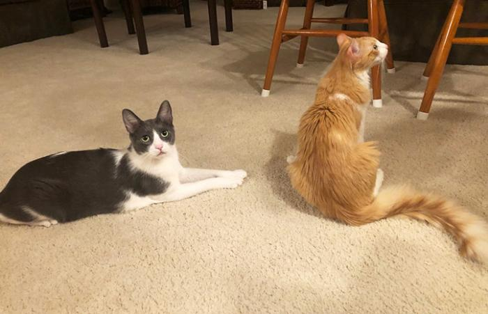 Karper and Kane the cats next to each other on the floor