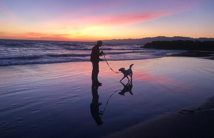 Luna the dog taking a walk on the beach with a person with a gorgeous sunset in the background