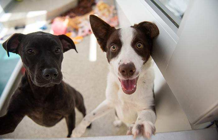 Two young dogs looking up at the camera, one smiling with mouth open
