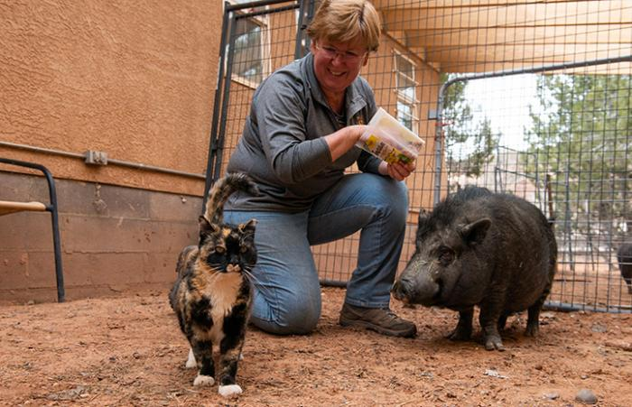 Meow the barn cat next to a potbellied pig and caregiver