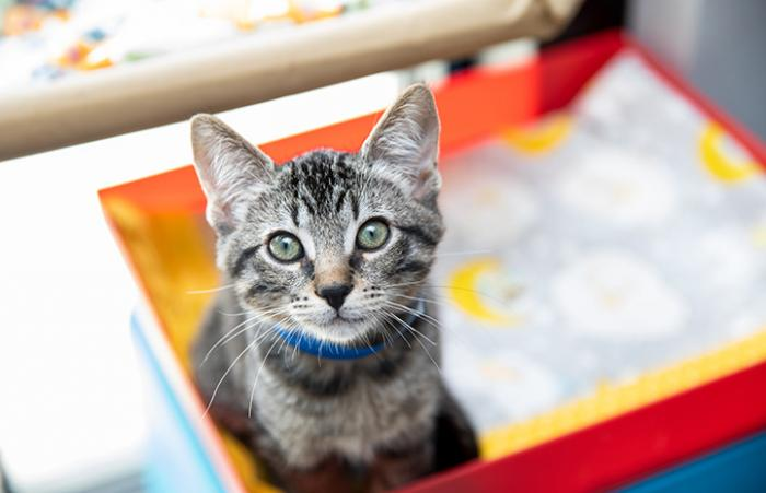 Brown tabby kitten with colorful background