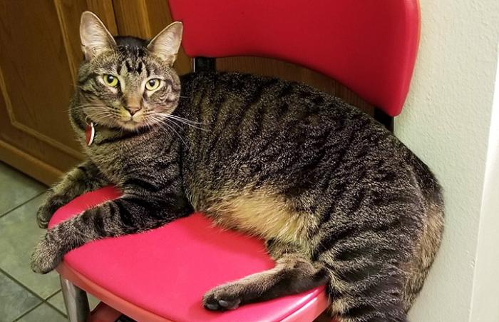 Fenny the brown tabby cat lying on a red chair