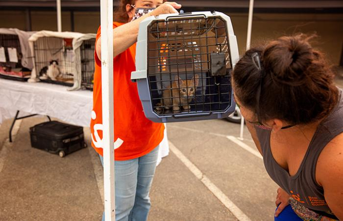 A woman looking at a kitten in a carrier held by another person