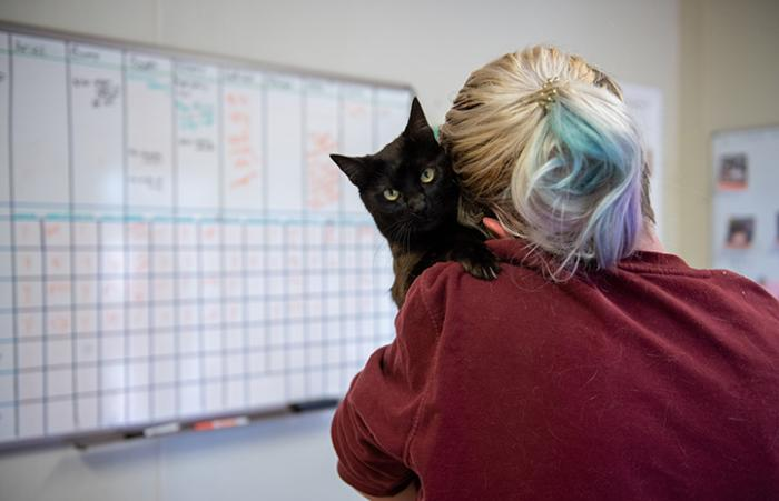A photo shot from the back of a woman of Ellery the black cat giving a hug over her shoulder