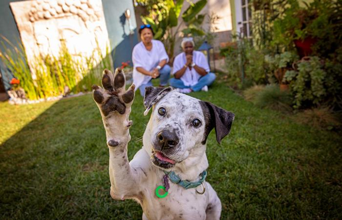Seven (formerly Kiwi) the dog with front paw raised and smiling, with his newly adoptive family in the background